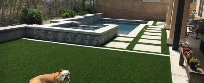 Dog on artificial grass lawn